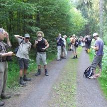 Sammeln im Wald vor Tanne
