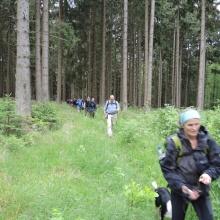 Im Wald vor Elend